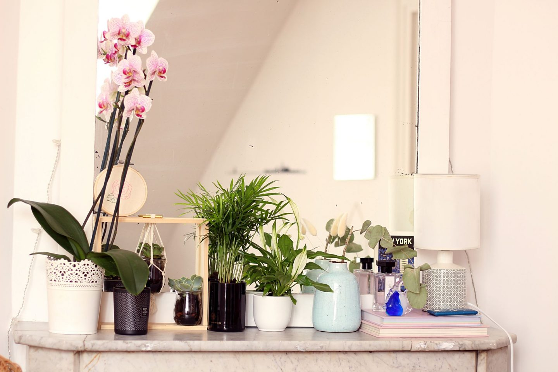 bienfaits des plantes d'intérieur